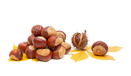 Autumn still life - fruit and leaves of chestnut on white close-up. photo