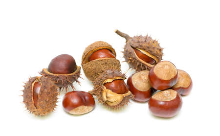 Chestnuts inside husk isolated on white background