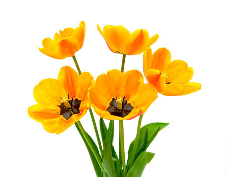 a bouquet of beautiful tulips on a white background closeup photo