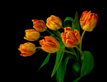 beautiful bouquet of seven tulips on black background close up photo
