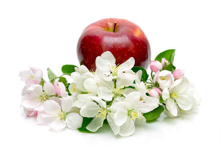 ripe red apple and apple flowers on a white background close-up photo