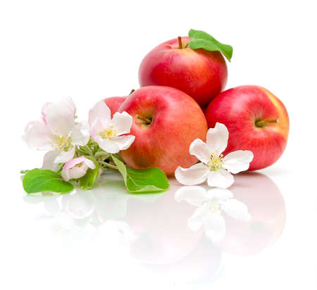 apple flowers and ripe red apples on a white background close-up of the reflection