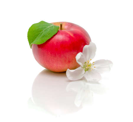 ripe juicy red apple and the apple flower closeup on white background with reflection