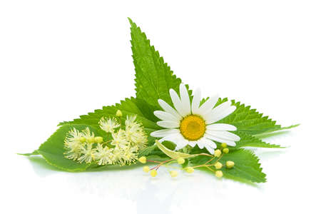 chamomile flower: chamomile, nettle leaves and lime flowers on a white background close-up of the reflection