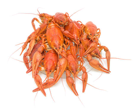 Boiled crawfish on a white background - view from the top photo