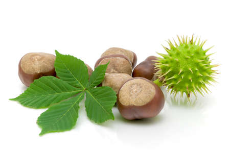 loose leaf: fruit and chestnut leaf isolated on white close-up
