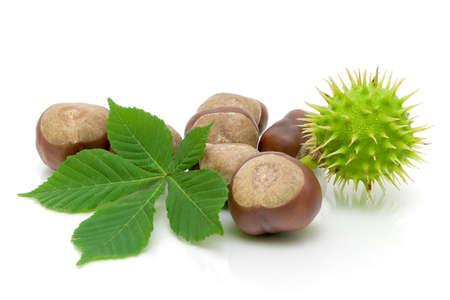 Obst-und Kastanien-Blatt auf weißem Nahaufnahme isoliert