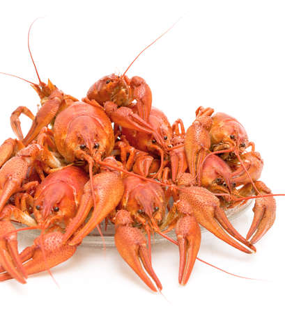Boiled crayfish on a white background close-up photo
