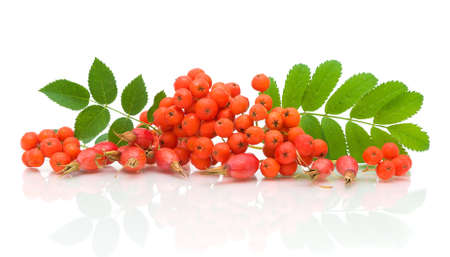 a bunch of rowan berries and rose hips on a white background with reflection closeup