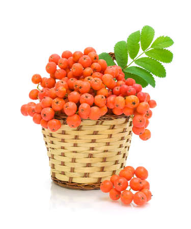 ripe berries of mountain ash in a wicker basket on a white background close-up Stock Photo