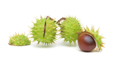 three mature chestnut isolated on white close-up