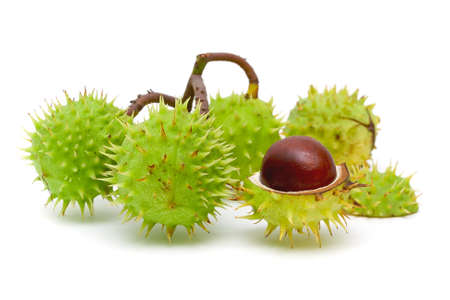 four mature chestnut close-up isolated on white background photo