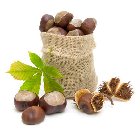 bag with ripe chestnuts and chestnut leaf isolated on white background photo