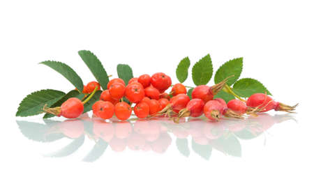 ripe red berries of mountain ash and rose hips on a white background with reflection