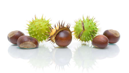 seven mature chestnuts on a white background closeup with reflection photo