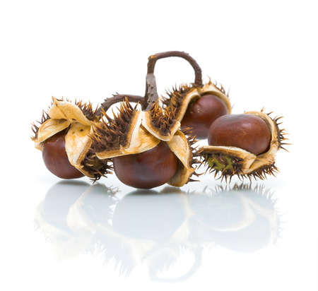 Bunch of ripe chestnuts on a white background closeup with reflection photo