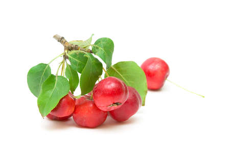 Ripe red apples on a branch with green leaves close up on white background Stock Photo - 18513164