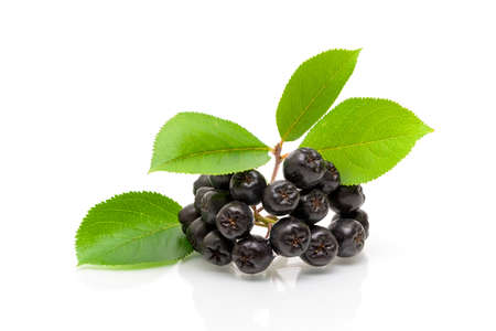 Bunch of ripe black chokeberry and green leaves on a white background. horizontal photo.