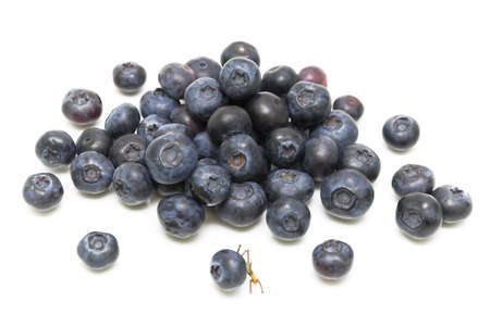 ripe blueberries. Top view. on a white background close-up. Stock Photo - 18561724