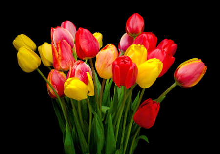 beautiful bouquet of tulips of different colors isolated on a black background closeup Stock Photo - 18656633