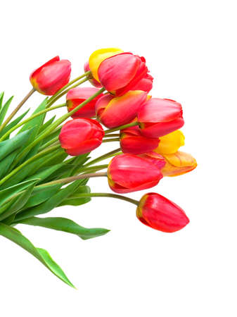 vertica: beautiful bouquet of tulips of different colors. isolated on white background - close-up