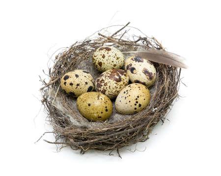 nido de pajaros: Seis huevos en un nido y lápiz sobre un fondo blanco. vista desde arriba. foto horizontal.