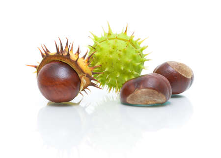ripe chestnuts close-up on a white background photo
