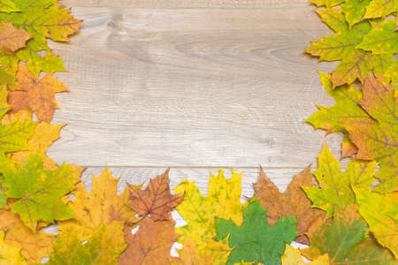 withering: autumn maple leaves on a wooden background. top view - horizontal photo. Stock Photo