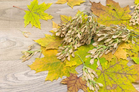 withering: autumn leaves and seeds on a wooden background. horizontal photo.