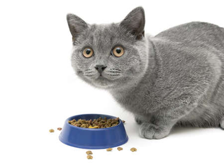 kitten eating cat food on white background.  photo