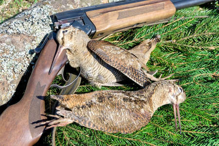 hunting trophies. woodcocks closeup and rifle hunting. horizontal photo. Stock Photo
