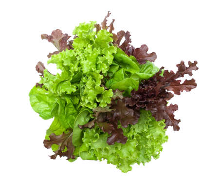lettuce different varieties isolated on white background.  Stock Photo