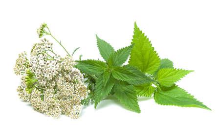 herbs: yarrow and nettle on white background. horizontal photo. photo