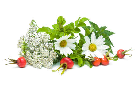 herbs and berries of wild rose isolated on white background. horizontal photo. Stock Photo