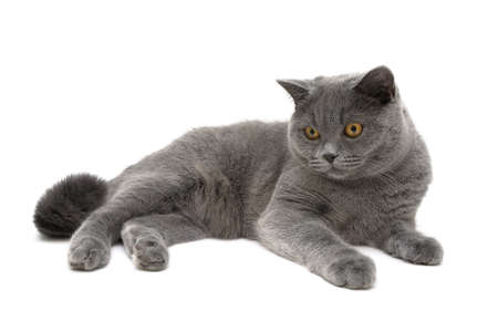 young cat isolated on a white background close-up. horizontal photo. photo
