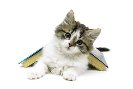 fluffy kitten and open book isolated on white background close-up. horizontal photo. Stock Photo