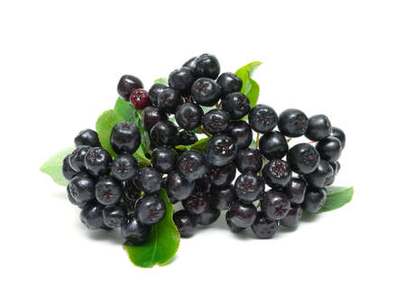 bunch of ripe berries of Aronia isolated on a white background. horizontal photo. Stock Photo