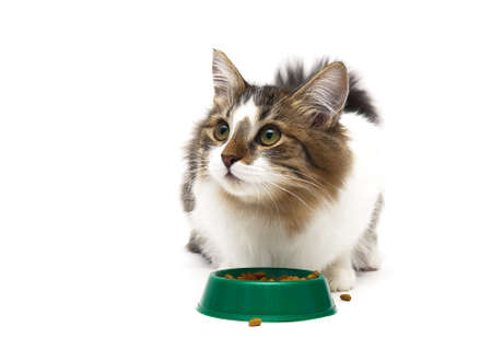 beautiful fluffy kitten sits beside a bowl of food on a white background. horizontal photo.