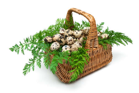 straw twig: quail eggs in a basket isolated on a white background. horizontal photo.