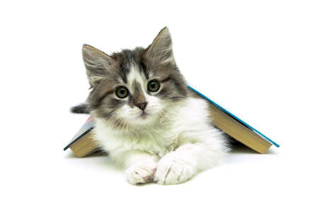 kitten lying under a book on a white background. horizontal photo.