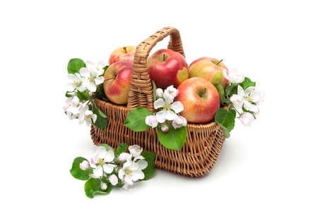 ripe apples in the basket and apple flowers on a white background. horizontal photo.
