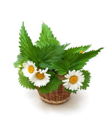 nettle leaves and chamomile flowers on a white background. vertical photo.