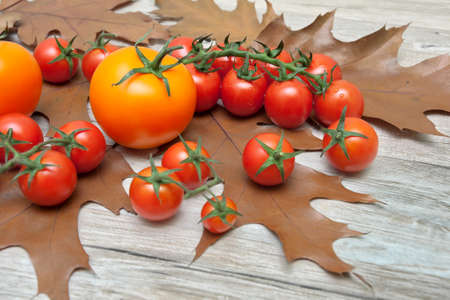 ripe tomatoes and autumn leaves on a wooden background. horizontal photo.