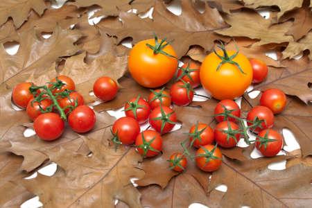 ripe tomatoes lying on the autumn leaves. horizontal photo.