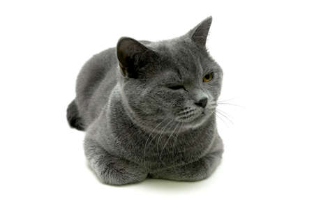 cat close up on a white background. horizontal photo. Stock Photo