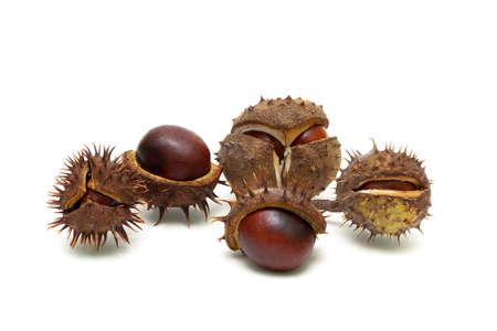 Fruits of chestnut isolated on white background close-up. Horizontal photo.