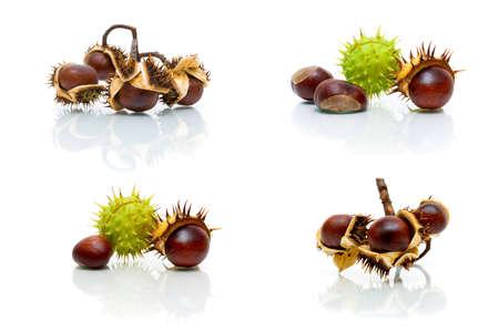 fruit of chestnut isolated on white background. horizontal photo. Stock Photo