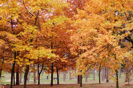 Beautiful orange leaves trees background nature autumn