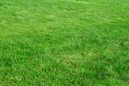 Green grass lawn nature fascinates beauty