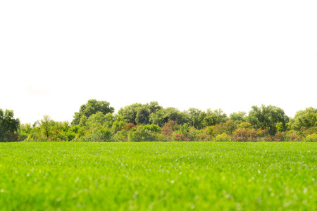 Grass sky clouds trees nature fascinates beauty green Banco de Imagens